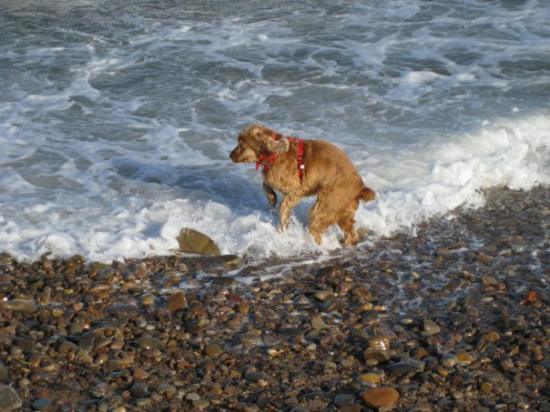 Fochabers, UK: North Sea a bit chillier than Ralphy is used to. Ralphy, Tugnet, Moray
