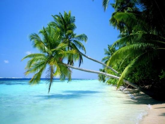 แอลเจียร์, แอลจีเรีย: j adore beucoup de la plage sur mer
