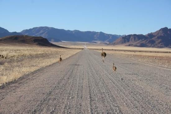 Sossusvlei, นามิเบีย: Namib Rand