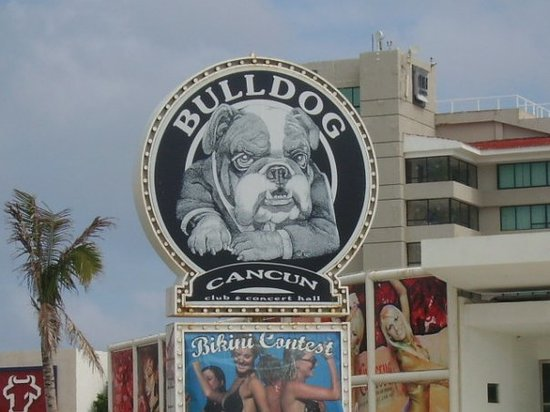 Bulldog Cafe Cancun Mexico Top Tips Before You Go