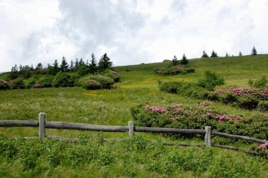 Roan Mountain, เทนเนสซี: A parting view. Beautiful, yes?