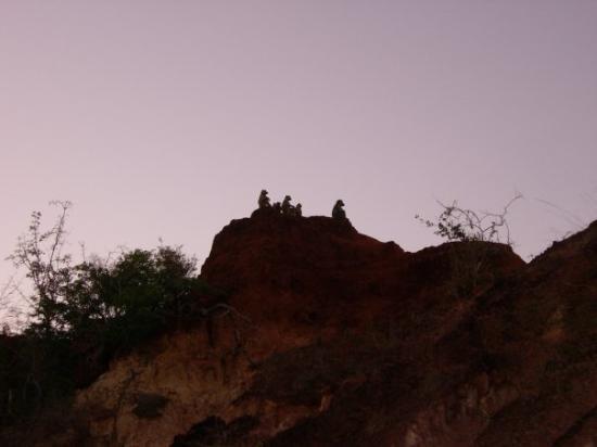 Malindi, เคนยา: eccole le scimie!!