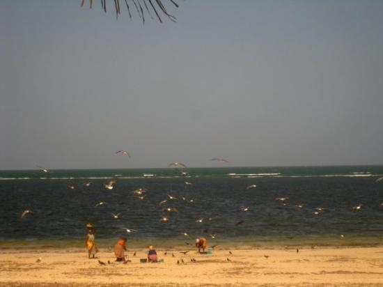 Rosada Beach ( Malindi - Kenya )