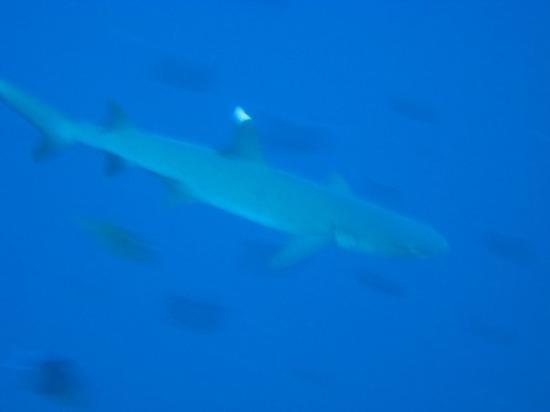 Bunaken Island ภาพถ่าย