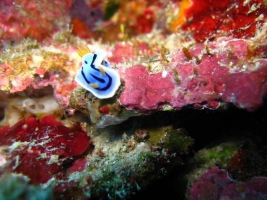 Остров Бунакен, Индонезия: Nudy