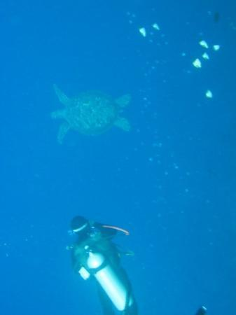 Bunaken Island, อินโดนีเซีย: Deep blue