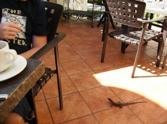 เปอร์โตริโก, สเปน: GIANT lizard! think we named him Raphael.