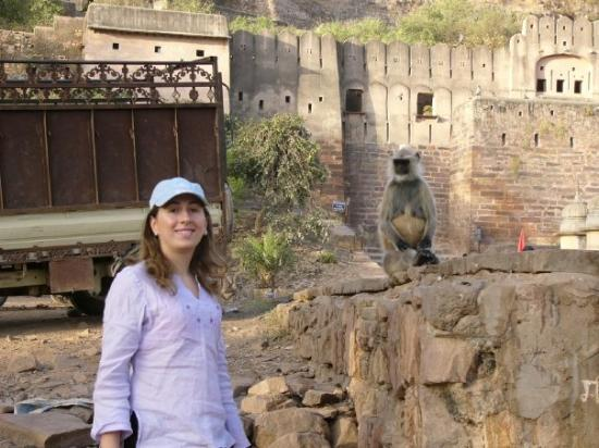 Ranthambore National Park, อินเดีย: Ranthambhore National Park