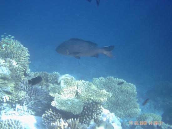 Ihuru Island: Snorkelling in the Maldives
