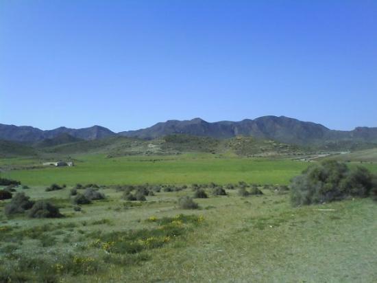 แอลเมเรีย, สเปน: Genoveses
