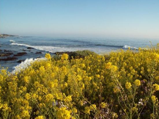 แคมเบรีย, แคลิฟอร์เนีย: Ocean & Flowers