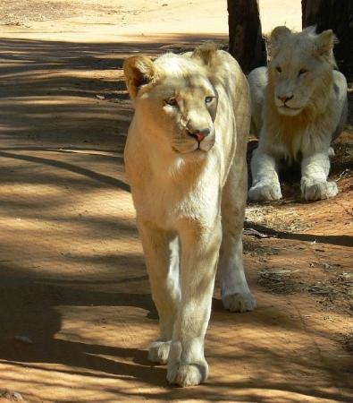 Pilanesberg National Park ภาพถ่าย