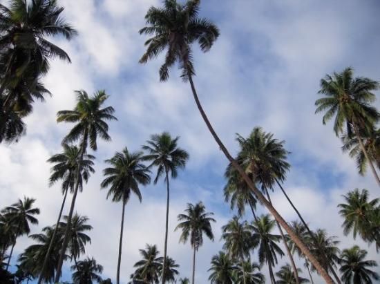 อุตูโรอา, เฟรนช์โปลินีเซีย: la tete dans les nuages et sous les cocotiers