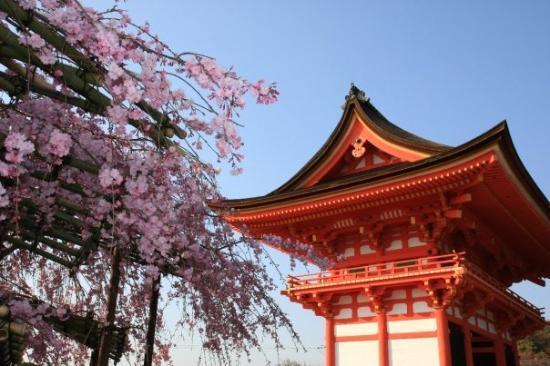 Ryoanji Temple ภาพถ่าย