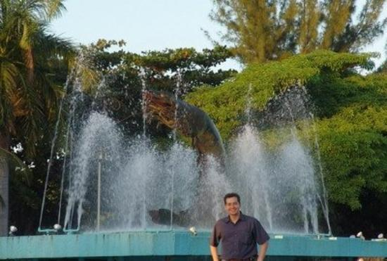 Gorieta del camarón, Ciudad del Carmen, Campeche, México