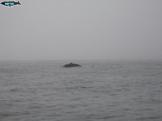 Monterey Bay Whale Watch ภาพถ่าย