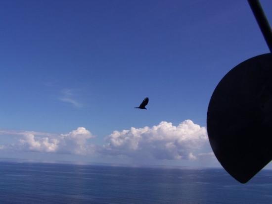 ออคโคริออส, จาไมก้า: an eagle flying by