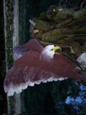 ออคโคริออส, จาไมก้า: an eagle statue by the pond