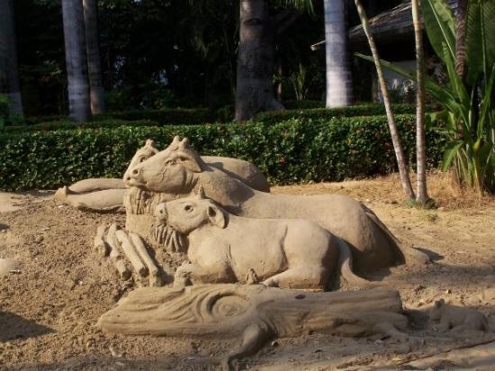 อะคาปูลโก, เม็กซิโก: the sheep, cow and donkey