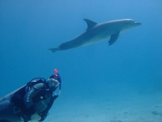 ฮูร์กาดา, อียิปต์: eeeveee and dolphin