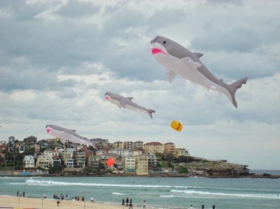 Bondi Beach: Fkying White Pointer Sharks- Festival of the Winds