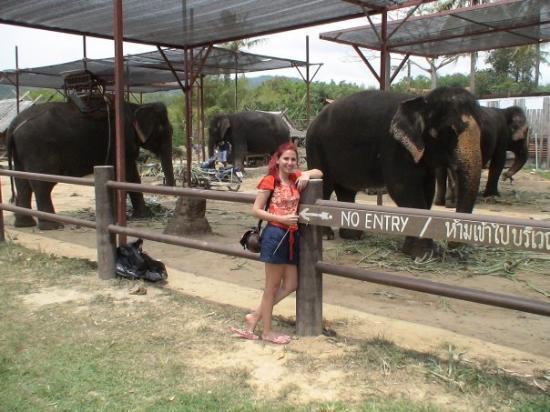 จังหวัดภูเก็ต, ไทย: elephant treking