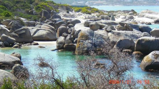 เดอร์บัน, แอฟริกาใต้: der selbe strand wie oben am tage/ simon`s town