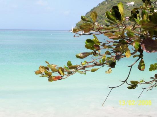 Tortola. . .<3