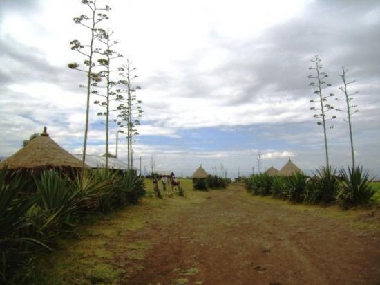 Lalibela, เอธิโอเปีย: Tipiques cases de camperols camí de Nakuto La'ab.  Tipicas casas de campesinos camino a Nakuto