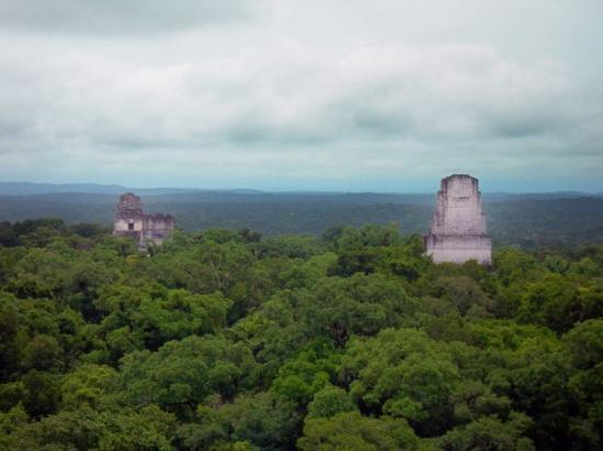 Tikal Museum / Museo Sylvanus G. Morley: This is the view from atop Temple 4.  You can see the twin temples, Temple 1 and Temple 2, in th
