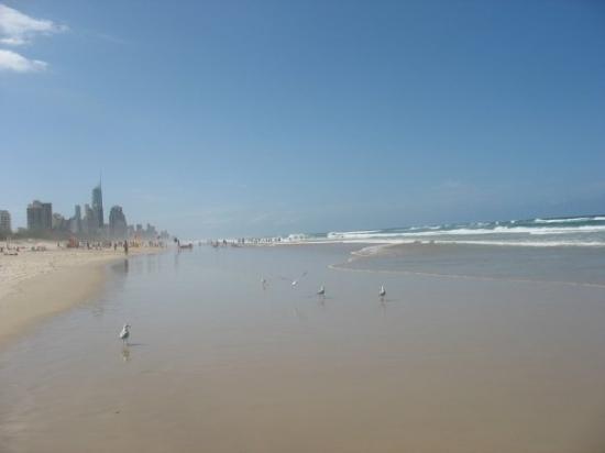 เซิร์ฟเฟอร์สพาราไดซ์, ออสเตรเลีย: Surfers Paradise