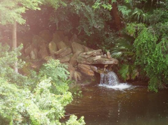 ดิสนียส์ แอนิมอล คิงดอม: Cool waterfall thing