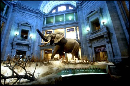 พิพิธภัณฑ์ประวัติศาสตร์ธรรมชาติแห่งชาติ สมิธโซเนียน: The best museum in DC