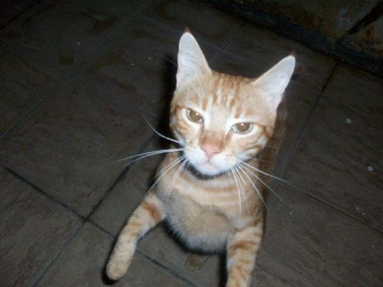 Arya II: Freaky but friendly cat - frequent visitor