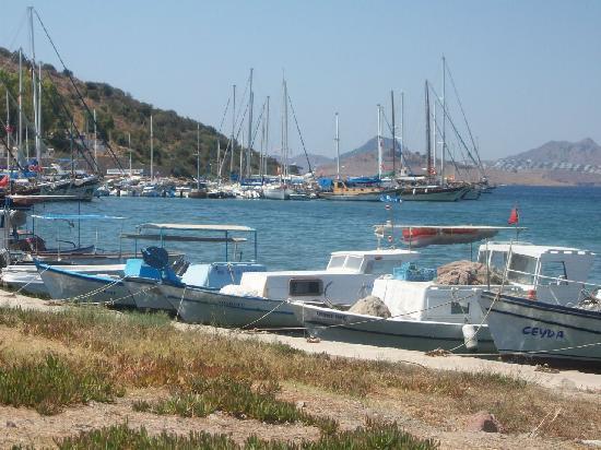 Arya II: Bitez harbour