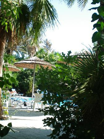 Veronica Hotel: View our to pool through palm trees