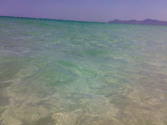 IBEROSTAR Albufera Park: el agua de playa de muro...