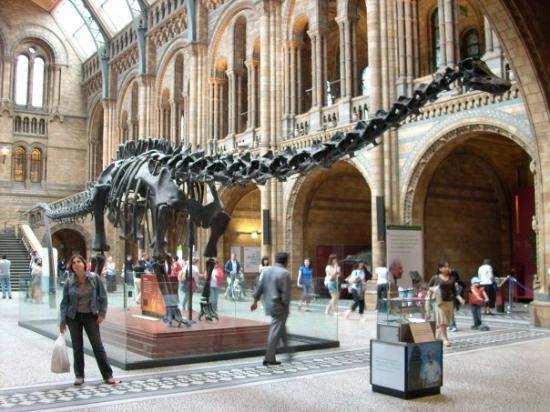 พิพิธภัณฑ์ประวัติศาสตร์ธรรมชาติ: En el museo de Historia Natural