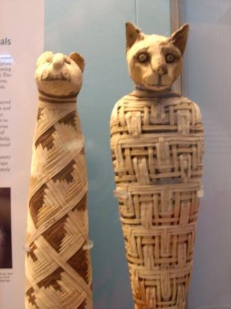 บริติชมิวเซียม: Un gatete momificado en el Museo Britanico, fijaos que carita de pena...