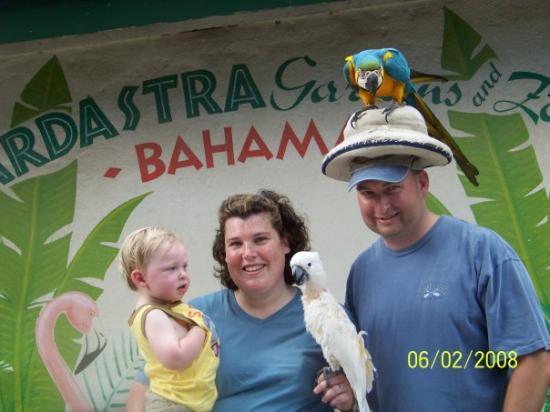 แนสซอ, New Providence Island: The family at the zoo in nassau bahammas