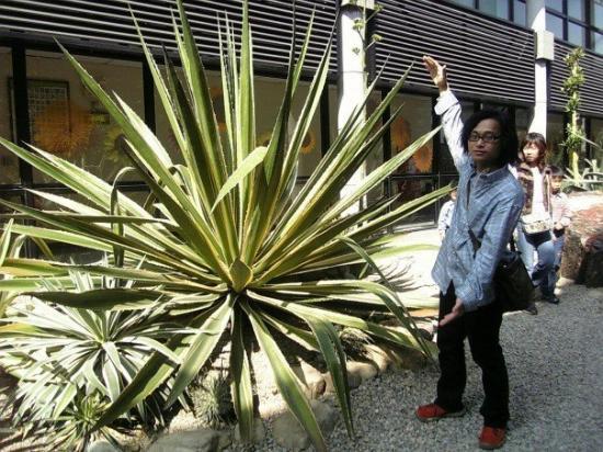 ไถจง, ไต้หวัน: 植物園內巨型的龍舌蘭