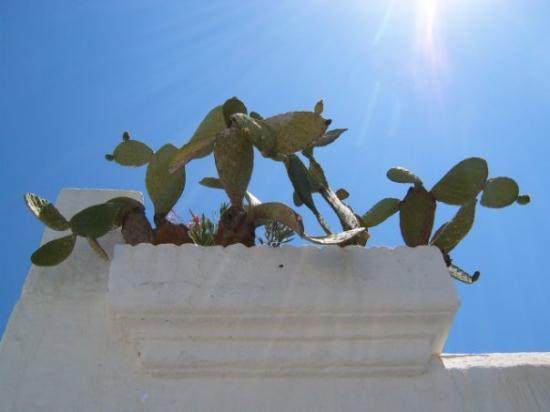 โรดส์ทาวน์, กรีซ: Rhodos 2007