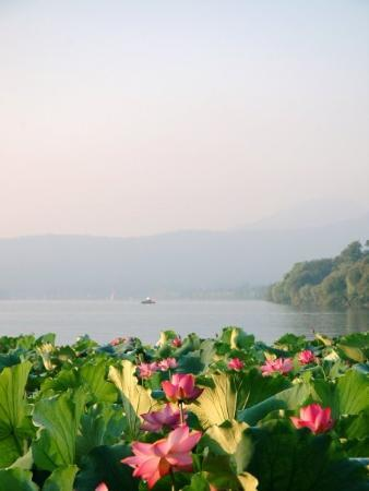 West Lake (Xi Hu): Mid-Summer and the Lotus flowers are in full bloom!