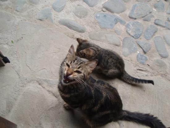 นิโคเซีย, ไซปรัส: Cyprus cats I
