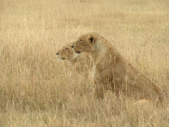 Serengeti National Park ภาพถ่าย