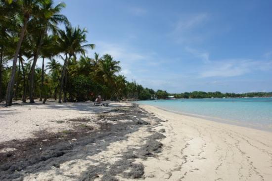 กวาเดอลูป: saint anne playa