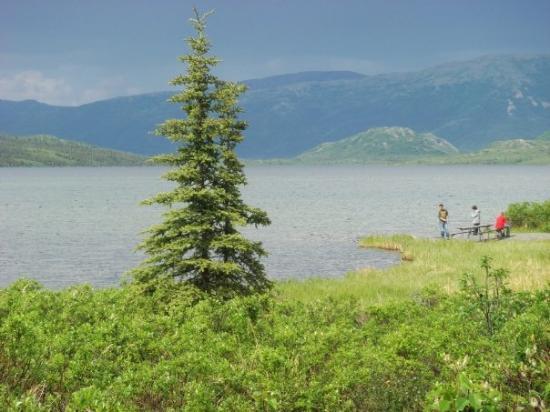 Denali National Park and Preserve ภาพถ่าย