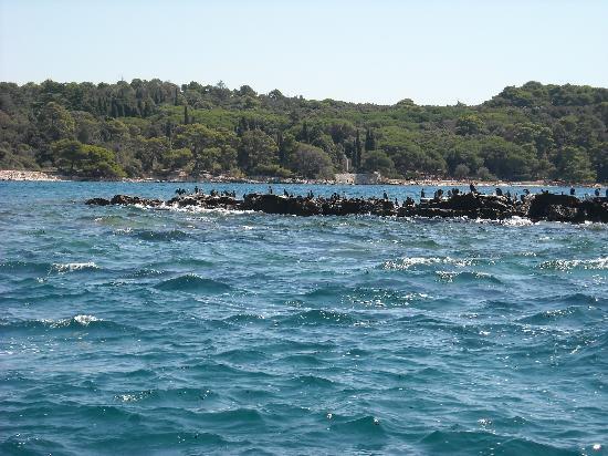 Villa Lucu: colonia di gabbiani, su un'isoletta nel mare tra rovigno e l'isola rossa