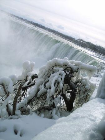 ไนแอการาออนเดอะเลก, แคนาดา: Trees at the falls