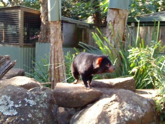 เซิร์ฟเฟอร์สพาราไดซ์, ออสเตรเลีย: Currumbin Wildlife Sanctuary, Australia